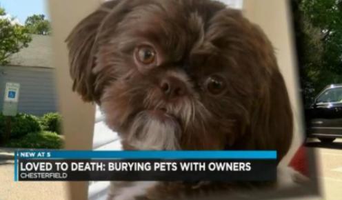 立遗嘱要爱犬陪葬惹争议,无辜宠物被安乐死