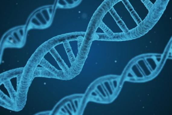 科学家研究发现DNA于人体免疫力强