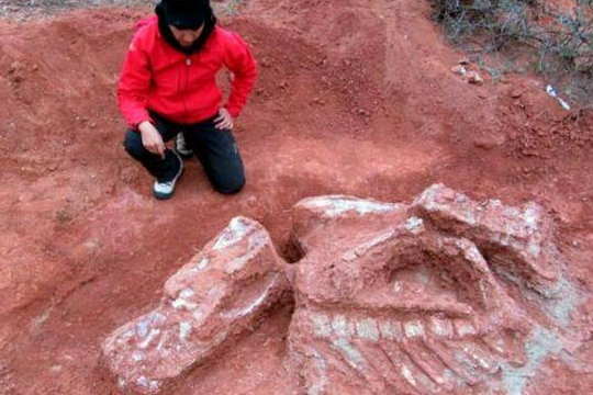 巨型恐龙遗骸出土