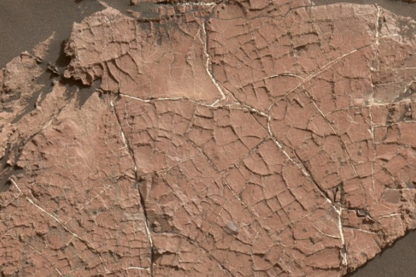 研究声称NASA探测器早在几十年前就毁坏了火星生命证据