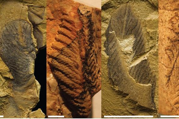 科学家发现奇怪化石无法确定是植物还是动物