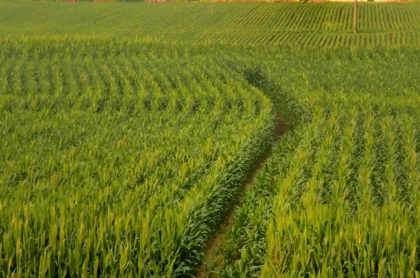 美国农工业部最新数据表明农作物水平不足以提供标准饮食