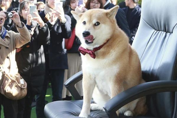 日本网红汪神烦狗出现