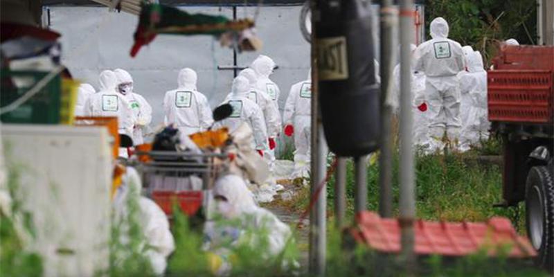 韩国紧急扑杀家禽,为防止再度来袭的禽流感病毒扩散