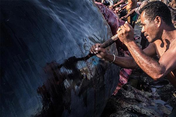 小岛渔民以捕鲸为生,摄影师纪录全过程作品惹争议