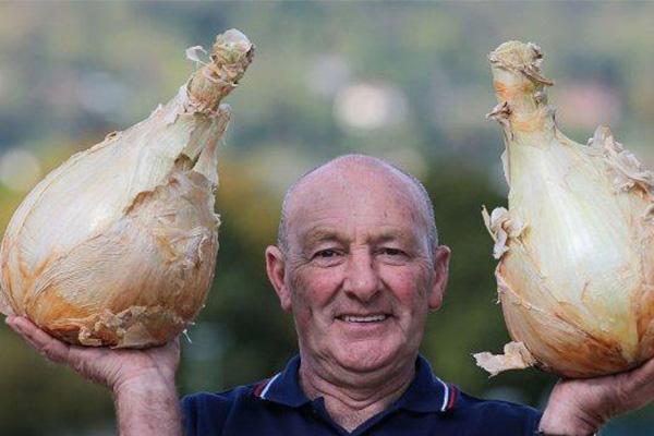 """英国巨型蔬菜大赛举行,""""巨无霸""""蔬菜齐上阵竞争激烈"""