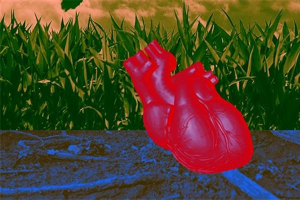 """科学家开启人造心脏,部分生理组织已经能够被""""仿制"""""""