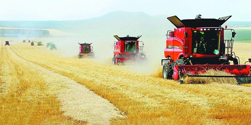 中国发现农业奇迹,养活地球没问题