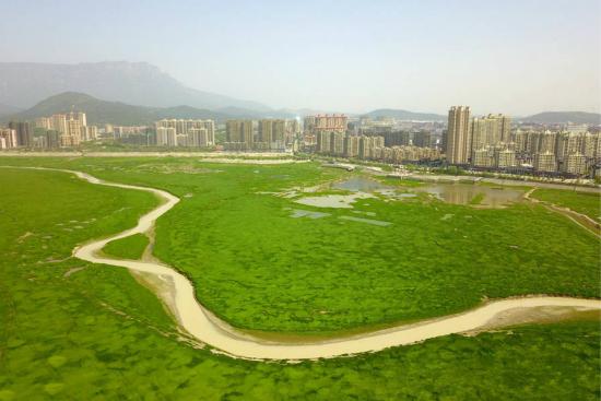 鄱阳湖河床变大草原