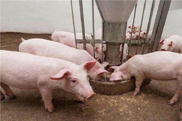 贸易战推高猪肉价格,对整个CPI的影响也非常有限