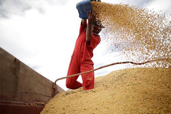 大豆价格要降,巴西选择增产后对行情产生影响
