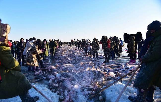 一网捞出30万斤鱼