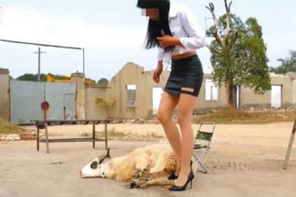网红虐杀动物