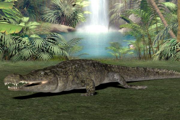 远古生物帝鳄究竟有多大,帝鳄吃什么