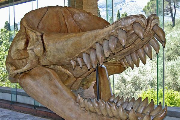 曾经的海洋霸主梅尔维尔鲸为什么会灭绝