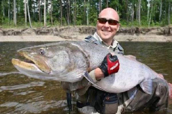 世界上最大的哲罗鲑有多大?哲罗鲑生存区域