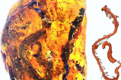 人类首次在琥珀中发现史前蛇类
