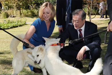 文在寅接受BBC采访,2只丰山犬实力抢镜