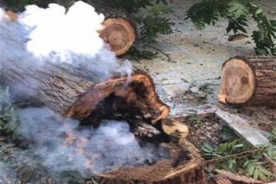武汉杨树热得冒烟,连续多日气温超过39度