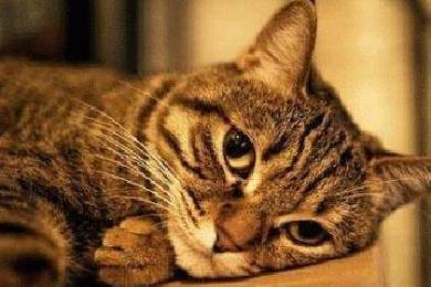 中国猫咪误闯集装箱,漂洋过海登陆意大利