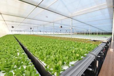 京东自建植物工厂,面积超一万平米规模庞大