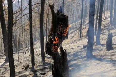 警方查明凉山森林火灾原因,故意纵火男子已被刑拘
