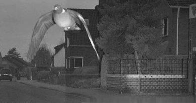 德国警方给鸽子开罚单,鸽子至今还没有缴纳罚款