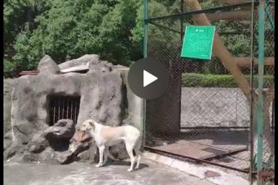 武汉一所动物园以狗充狼,究竟是滥竽充数还是有意为之?