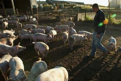 粮农猪农遭重大打击,美官员呼吁农民要有长远眼光