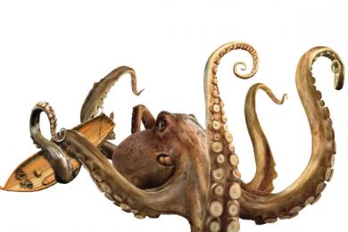 研究人员声称章鱼或来源于地球之外