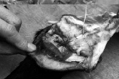 商贩挂驴腿卖猪肉,记者暗访实地调查