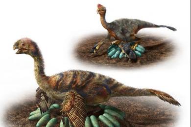 日本研究人员发现大型恐龙或是自己孵蛋的