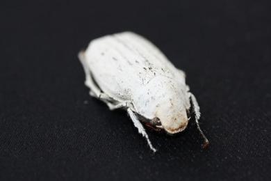 科学家借助白色甲虫特性研制新型超白软膜