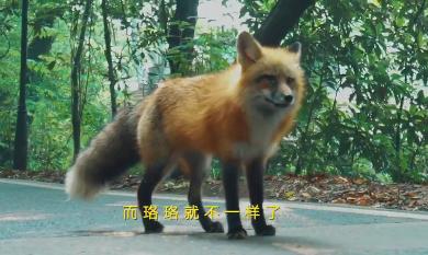 武大用小狐狸代言,今年各大高校招生都有哪些新招式?