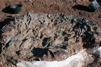 阿根廷惊现恐龙墓地,出土2.2亿年前化石