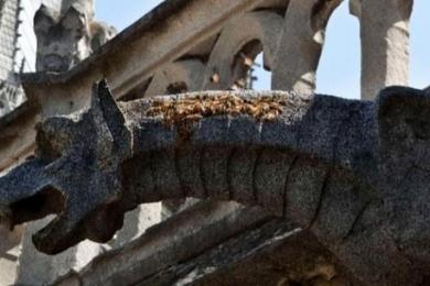 奇迹般逃过火劫,巴黎圣母院18万只蜜蜂还活着!