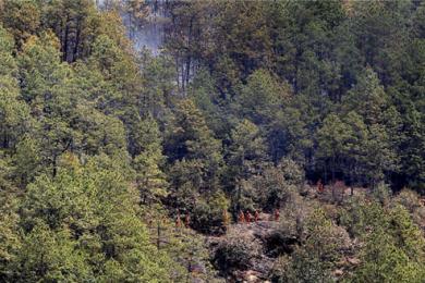 四川省凉山州冕宁县森林火灾已全部扑灭