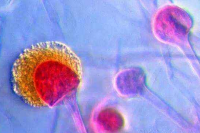 我国科学家研制新型霉菌孢子高密度储能器