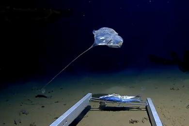 科学家在印度洋发现怪物,形似水母发出美丽蓝光