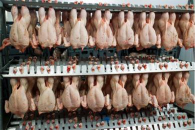 吃鸡太多生物圈变样,人类养殖造成的破坏性日益变大