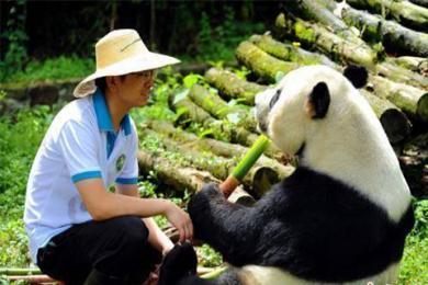 熊猫鹏鹏不治身亡,各界人士送上祝福愿一路走好