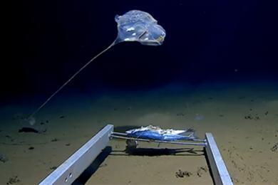 科学家发现怪物,全身散发蓝光令人着迷