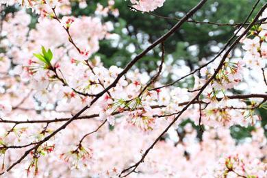 武大回应赏樱被打,给出了正式声明
